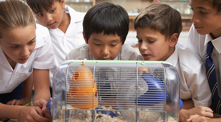 Children gathered around a hamster cage in classroom