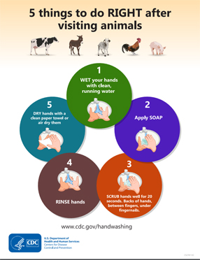 Publications Infographic cover for 5 Things To Do Right After Visiting Animals