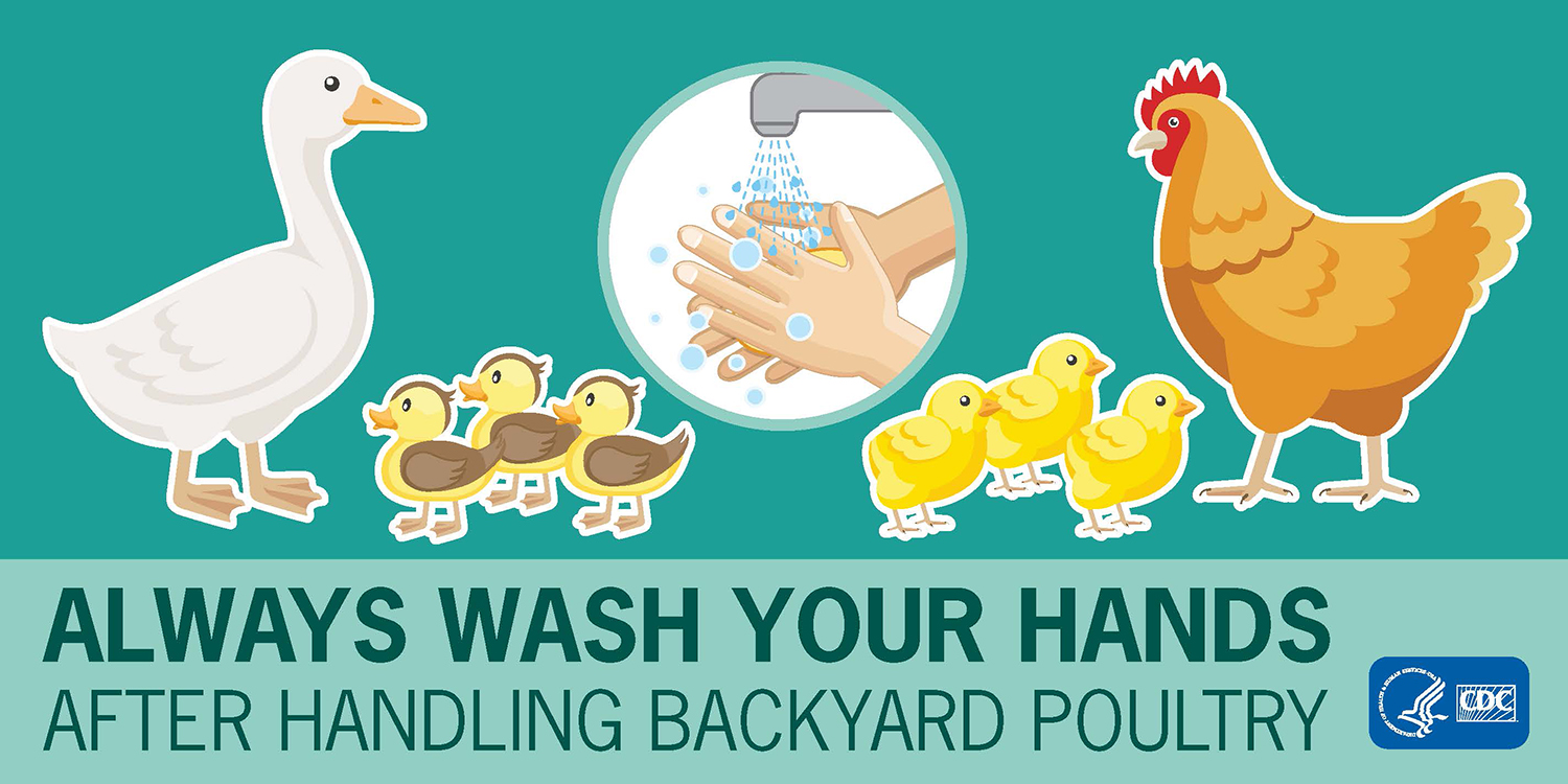 Keeping Backyard Chickens and Other Poultry | Features | CDC