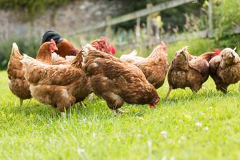 farm animals healthy pets healthy people cdc