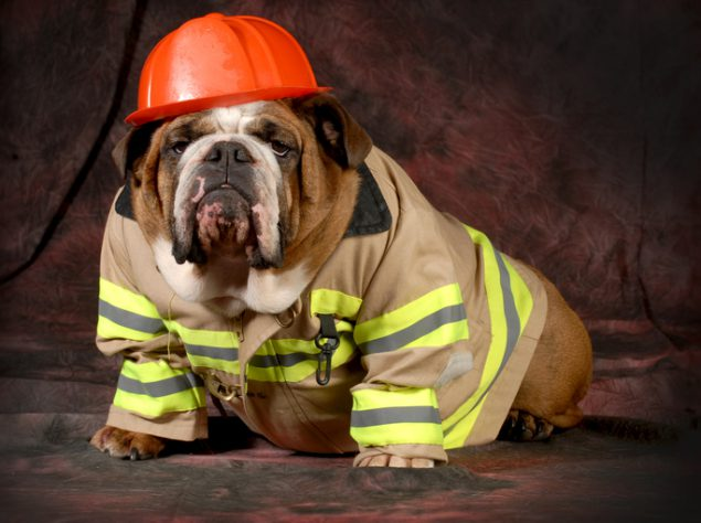 A dog wearing a fireman's helmet and jacket