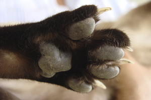 a cat's paw with long sharp nails