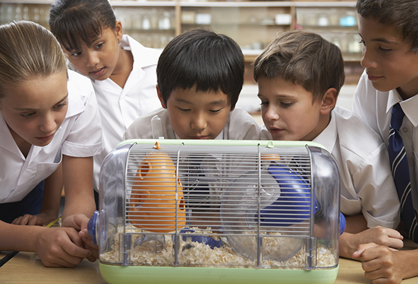Students in class with the class pet