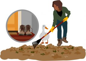 Illustration showing woman cleaning up after duck.