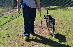 A boy trains a dog named Dalton at a juvenile detention center in Georgia. (Photo courtesy of Rescue 2 Restore)