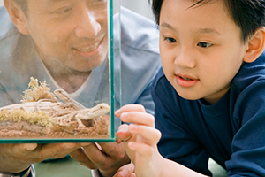 A father and son look at a lizard in a terrarium