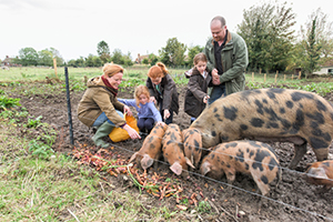 family feeding pigs