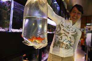 Girl holds a bag containing a goldfish. Photo
