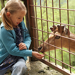 A girl at a petting zoo with deer.