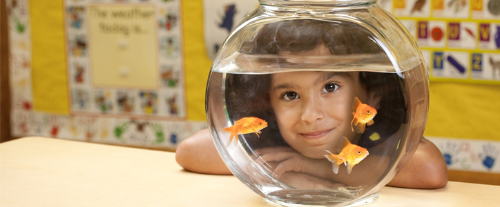 Girl smiling behind a goldfish bowl with three goldfish in it.