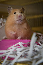 Small Mammals | Healthy Pets, Healthy People | CDC
