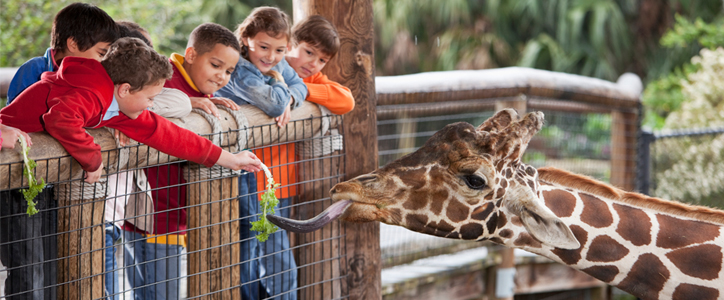 Kids feeding a giraffe by a fence.