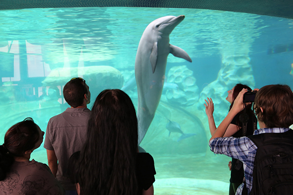 Kids watching a dolphin