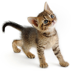 Cats | Healthy Pets, Healthy People | CDC