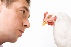 A veterinarian looks closely at a chicken for signs of illness