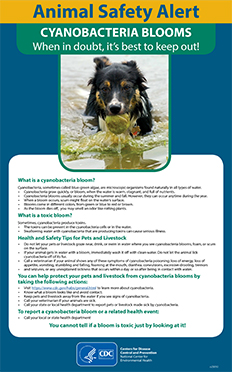 Poster for Animal Safety Alert: CYANOBACTERIA BLOOMS-When in doubt, it's best to keep out!