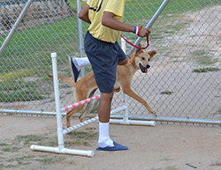 Rescue 2 Restore is a win-win for the boys and their dogs, as both benefit from exercise, unconditional love, and new skills. (Photo courtesy of Rescue 2 Restore)
