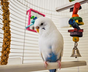 Birds Kept as Pets | Healthy Pets