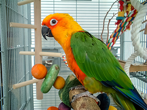 Birds Kept as Pets | Healthy Pets, Healthy People | CDC