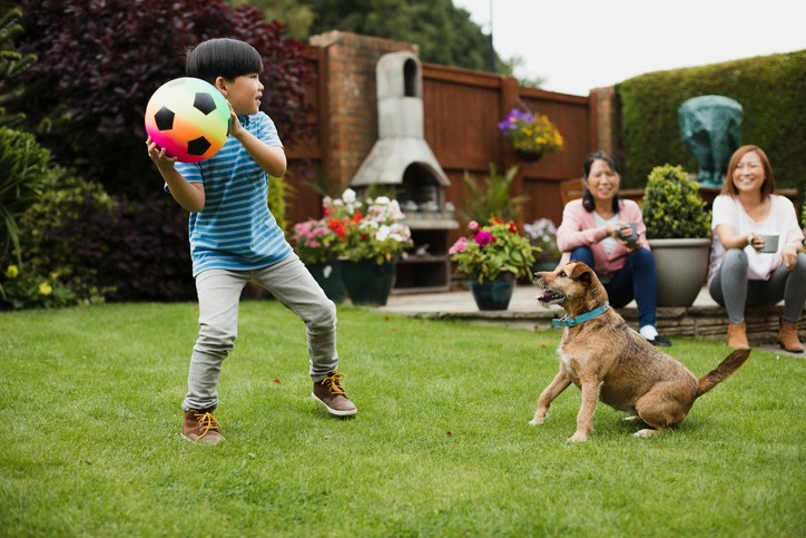 Boy playing ball with a dog