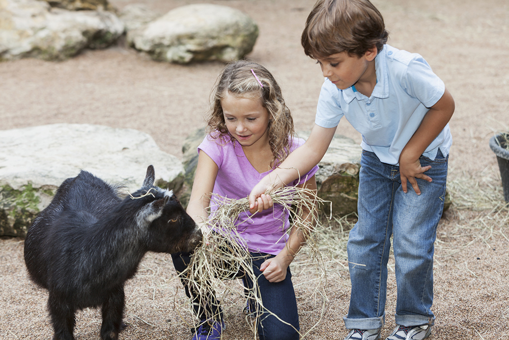 Children at petting zoo petting a goat