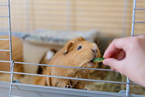 Salmonella Infection | Healthy Pets, Healthy People | CDC