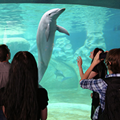 Dolphin in a tank in front of a crowd.