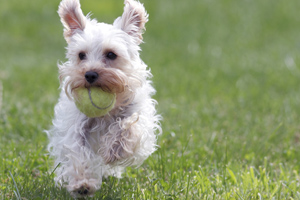 Watch How to Pick up a Dog Properly video