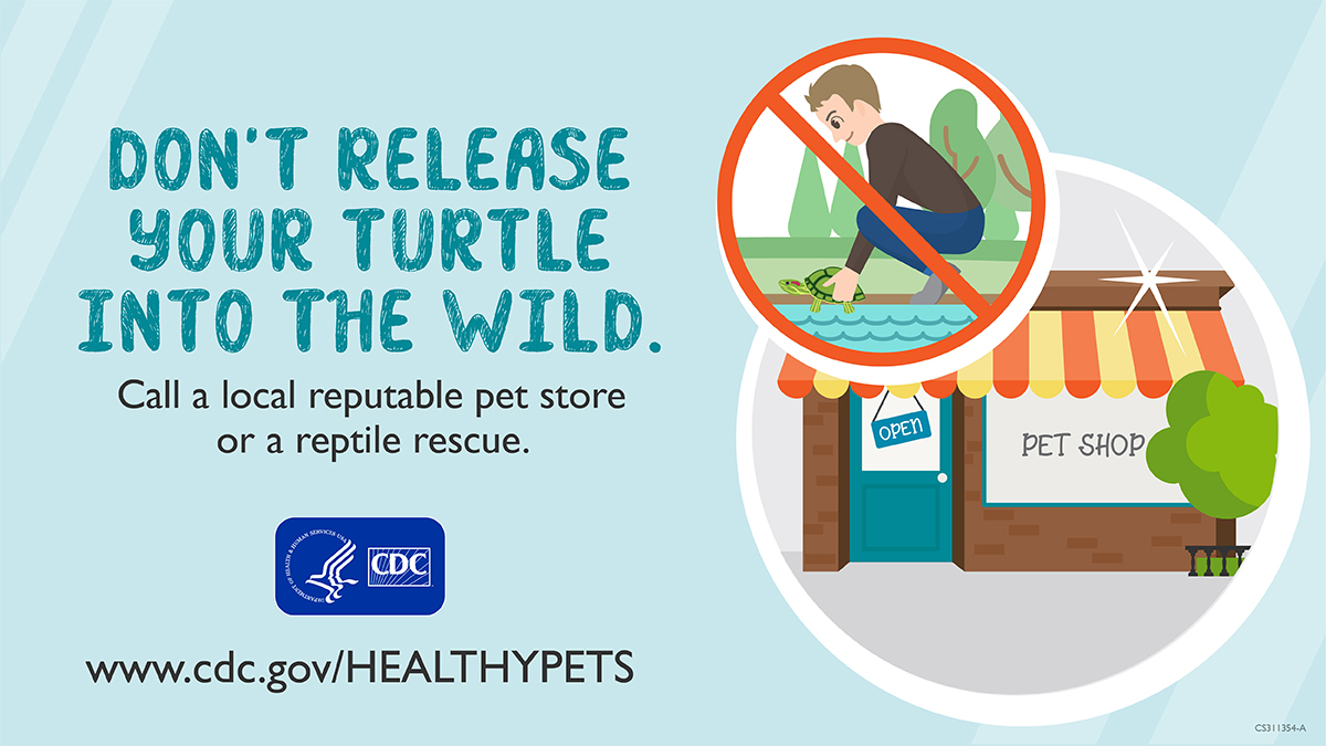 Social Media graphics: Don't Release Your Turtle into the Wild