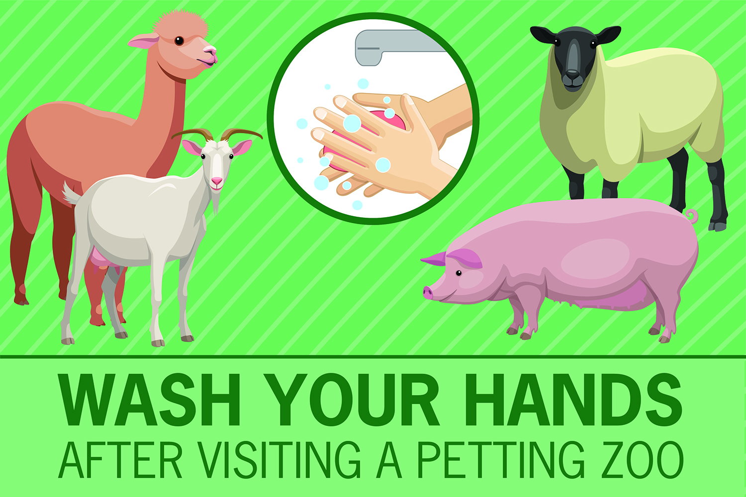 Always Wash Your Hands After Visiting a Petting Zoo Sticker