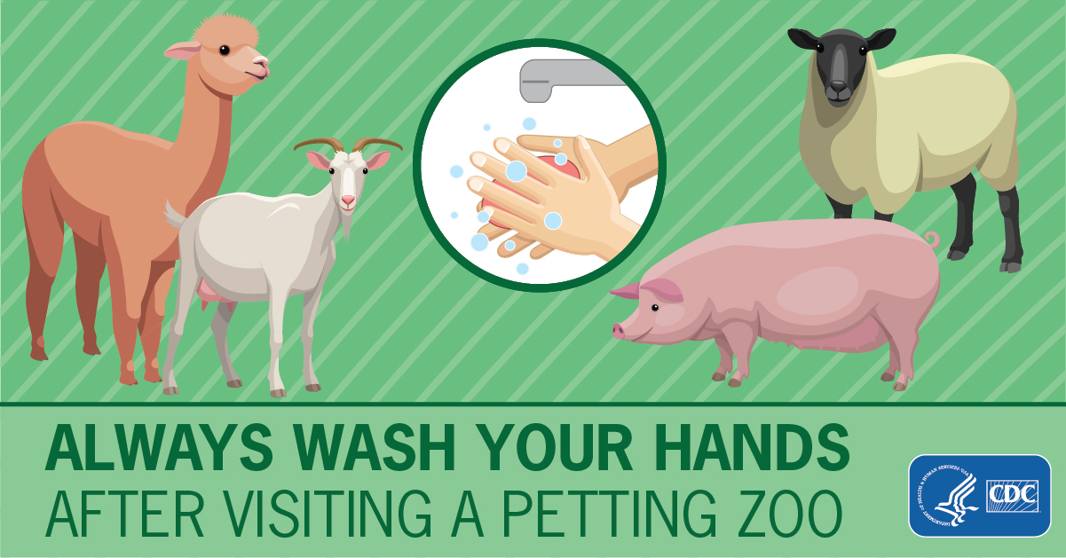 Always Wash Your Hands After Visiting a Petting Zoo for Facebook