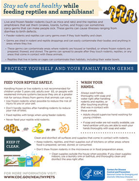 Publications Infographic cover for Stay Safe And Healthy While Feeding Reptiles And Amphibians