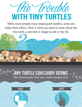Publications Infographic cover for Trouble With Tiny Turtles