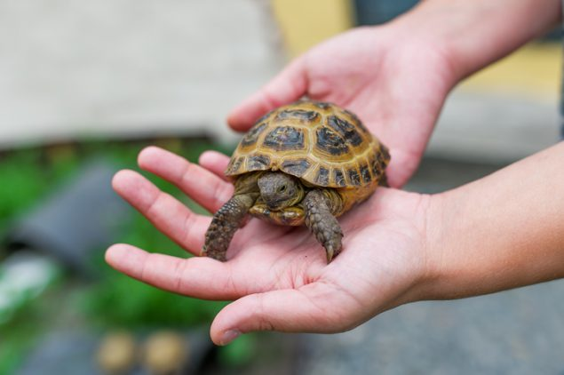 Turtle in boy's hand