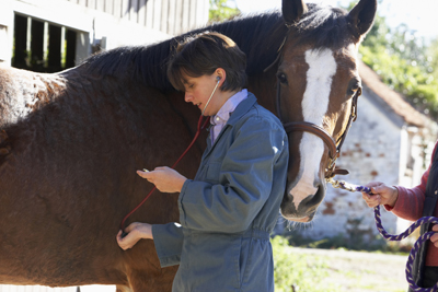 female veterinarian examines a horse