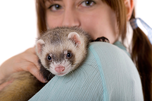 Woman cuddles her ferret