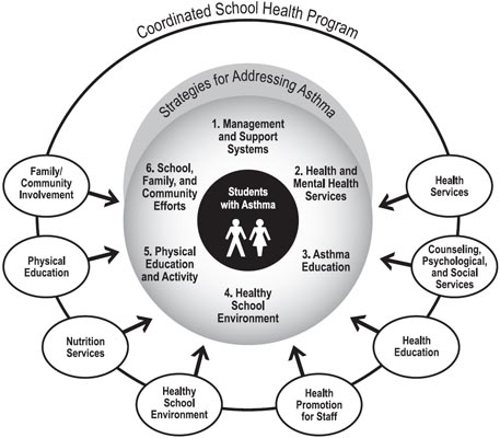 This graphic depicts a set of Strategies for Addressing Asthma as being part of an overall Coordinated School Health Program. A model Coordinated School Health Program includes the following components: Health Services; Counseling, Psychological and Social Services; Health Education; Health Promotion for Staff; Healthy School Environment; Nutrition Services; Physical Education; and Family and Community Involvement. The six strategies for addressing asthma and supporting the health of students with asthma fit within this model and include the following: 1. Management and Support Systems, 2. Health and Mental Health Services, 3. Asthma Education, 4. Healthy School Environment, 5. Physical Education and Activity, and 6. School, Family, and Community Efforts.