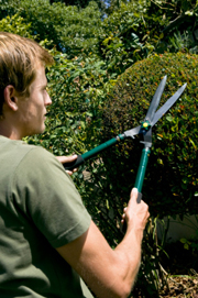 A closeup view of a man cutting a hedge.