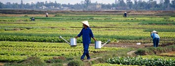 Photo: A farmer with watering cans