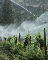 Photo: Sprinklers watering crops