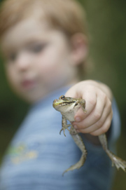 boy holding a dead frog