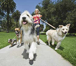 photo of woman walking dogs