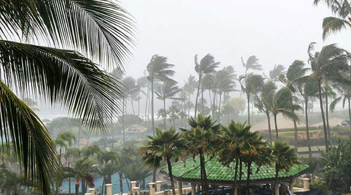 palm trees on a beach blown by heavy winds with dark clouds offshore