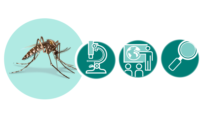 Illustration of mosquito, microscope, presentation icon, and magnifying glass.