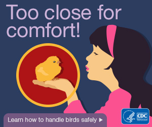 Too close for comfort! Learn how to handle birds safely.
