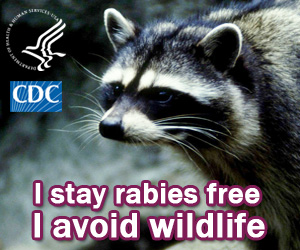 I stay rabies free. I avoid wildlife.