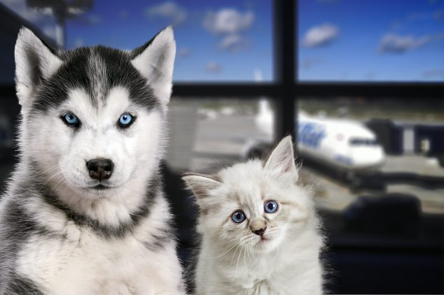 photo of a puppy and kitten