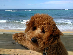 photo of a dog at the beach
