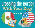 crossing the border with dog image