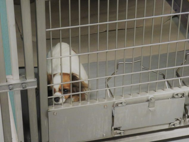 Illegal Puppy Imports Uncovered | CDC